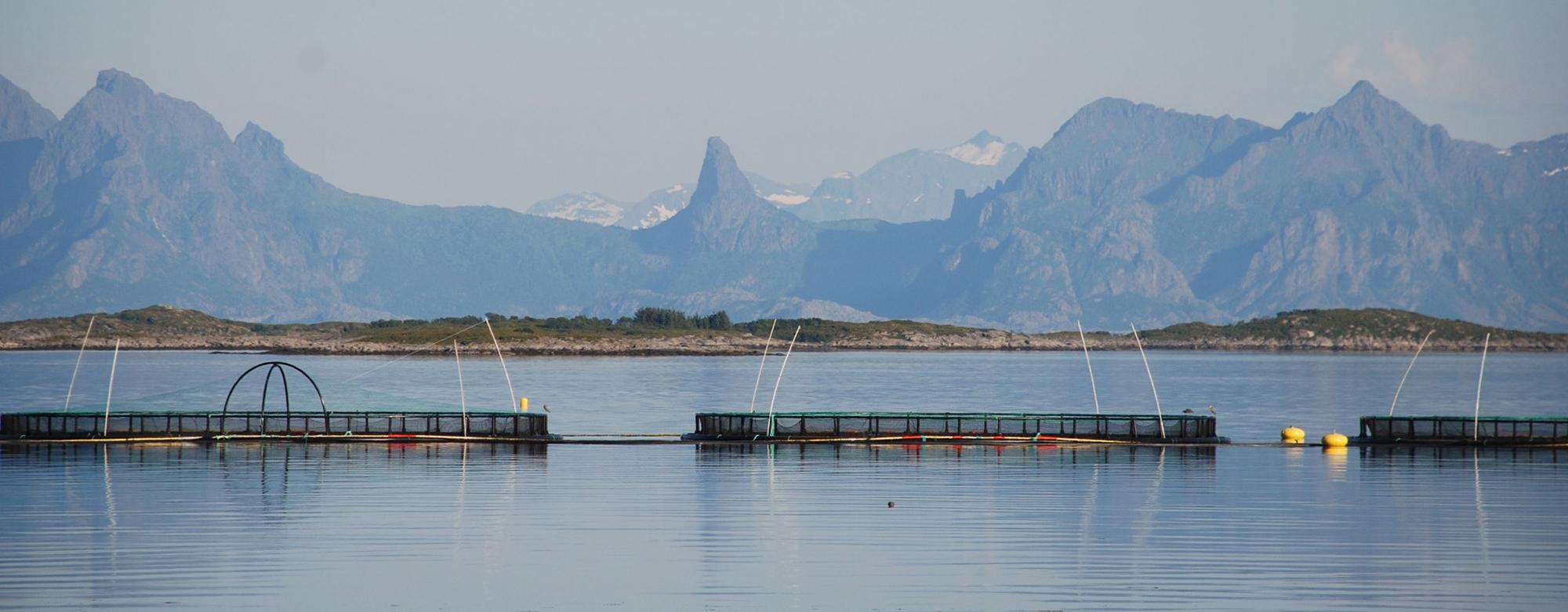 Oppdrettsmerder i fjord